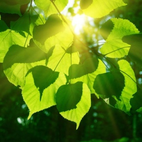 highquality_pictures_of_the_sun_leaves_169136
